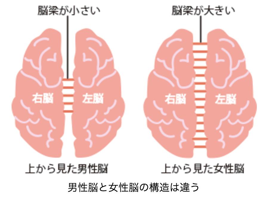 男女の脳の違い・考え方の違い